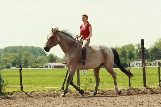 Na een lange tijd velvet roan merrie weer een keer - Kamer paard meisje ...