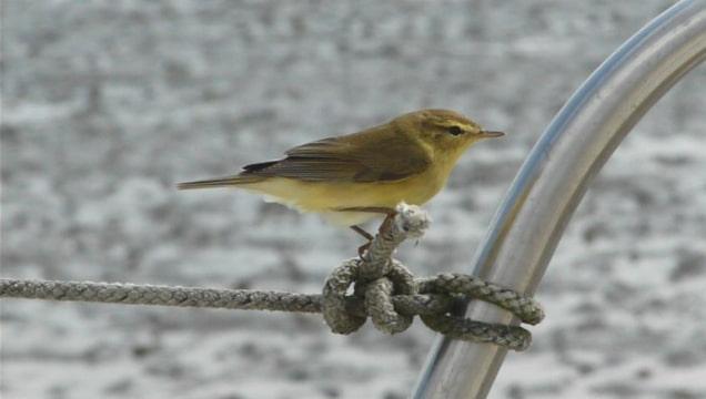 zeilersforum nl vraag voor de vogelkenners onder ons