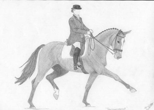 Hele Mooie Kleurplaten Van Paarden Tek Close Up Dressuurpaard Bokt Nl