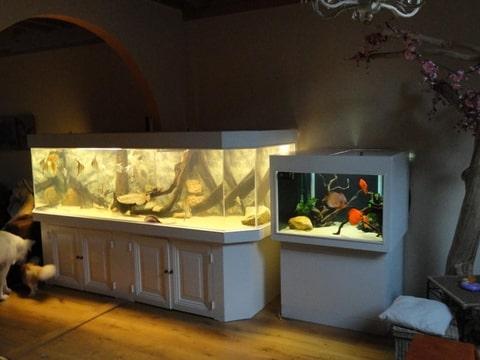 Roggenforum nl  u2022 View topic   Offerte aquarium