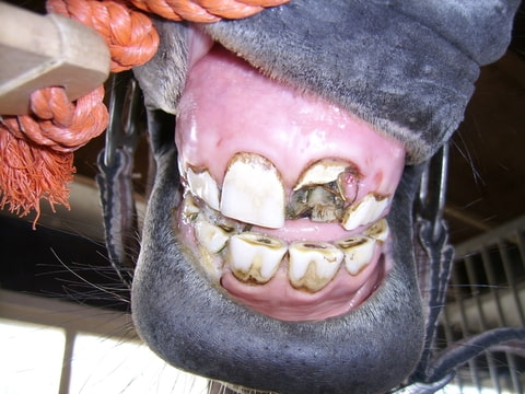 stuk tand afgebroken