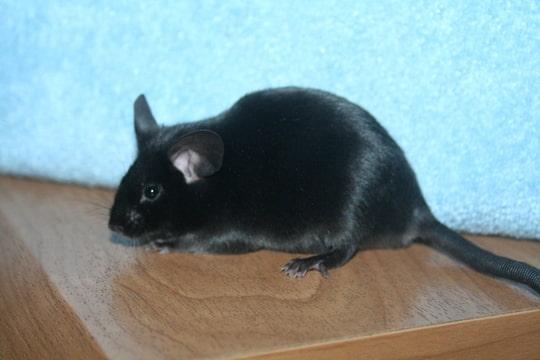 PEW and black Foto-M4TMYVYL-D