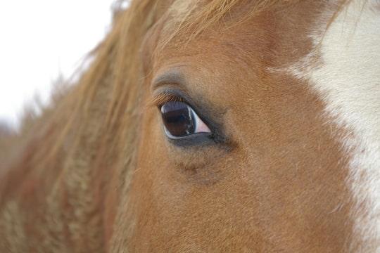 """Concours photo """" oeil de chevaux"""" venez votez ! Foto-I3ULGXL4"""