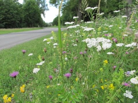 Afbeeldingsresultaat voor flora fauna maastricht