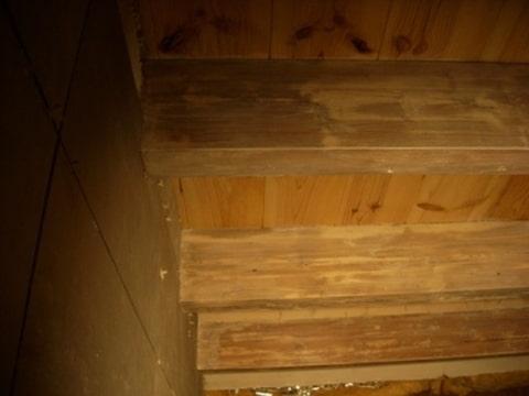 Houten plafond in de badkamer