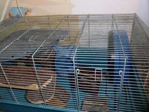 Te koop mooie hamsterkooi ferplast mary foto 39 s toegevoegd hamsterforum - Schilderij kooi d trap ...
