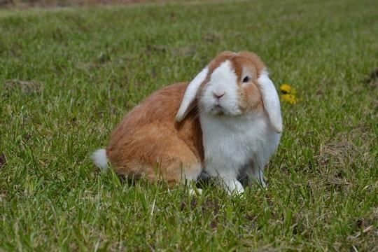 nhd oranje witoor bunny's plaza annelisa den hartog