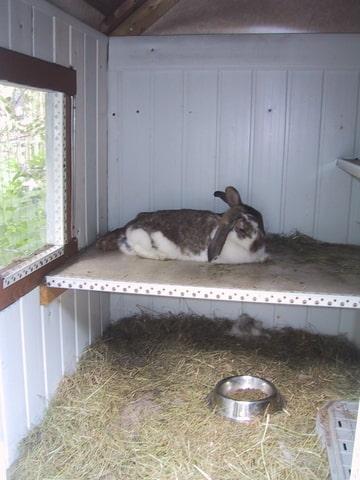 Zelf een konijnenhok in elkaar timmeren - Inrichting van een lounge in lengte ...