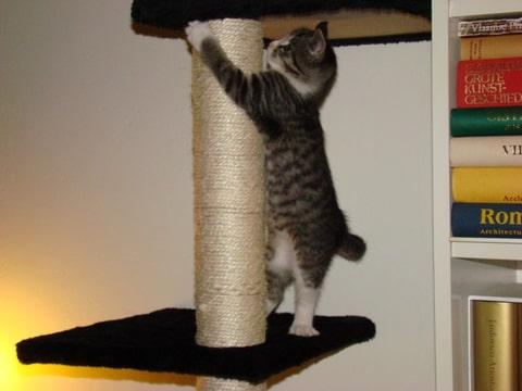 vraagjes over kitten opvoeden • Bokt.nl