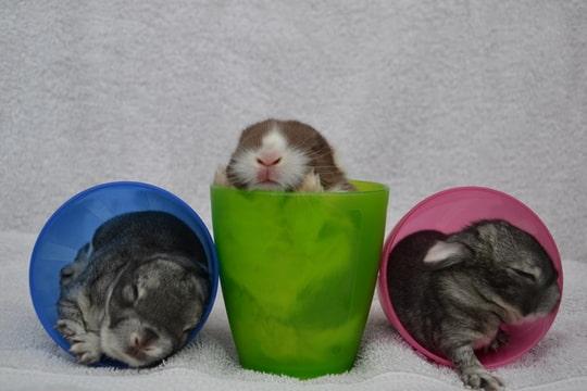 konijnen dierenfotografie annelisa den hartog