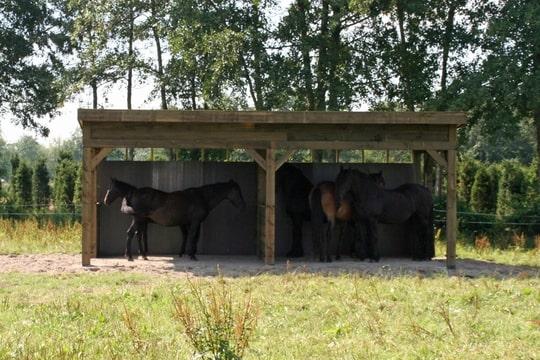 Paarden aan huis waar aan denken for Paard aan huis te koop