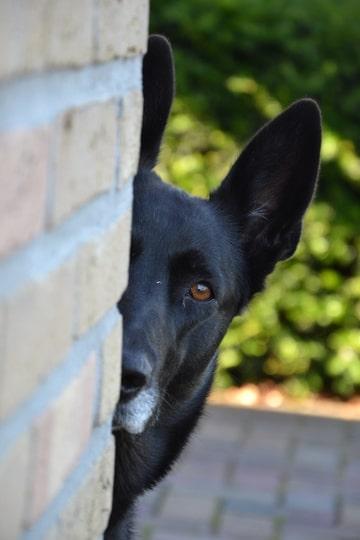 honden dieren fotografie annelisa den hartog