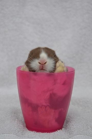 dieren fotografie annelisa bunnysplaza