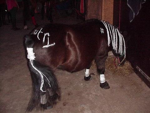 Idee Gezocht Pony Ruiter Verkleed Bokt Nl