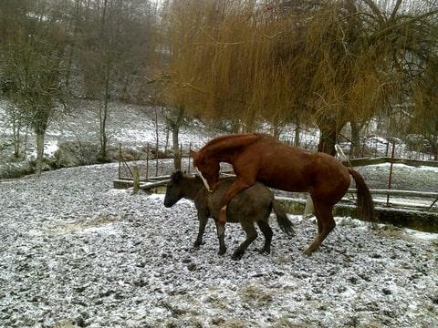 recherche mule(t) 1m20 -  trouvée!! Foto-Q6U83DU3