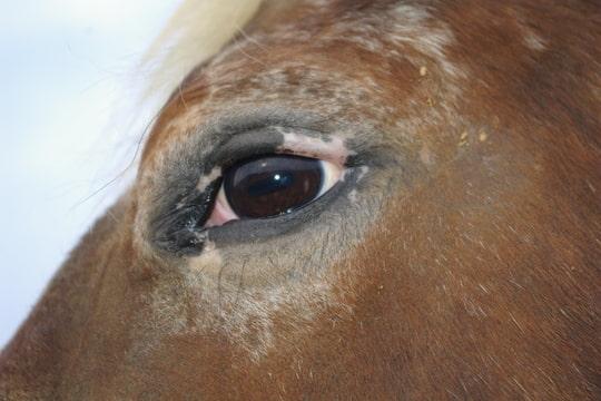 CONCOURS PHOTOS, L'oeil des chevaux ! - Page 2 Foto-C6C8BRKY