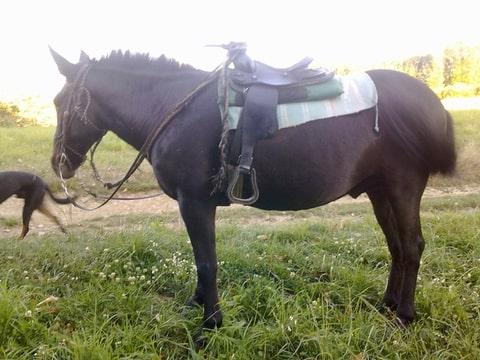 selle western pour double poney 1 forum cheval. Black Bedroom Furniture Sets. Home Design Ideas