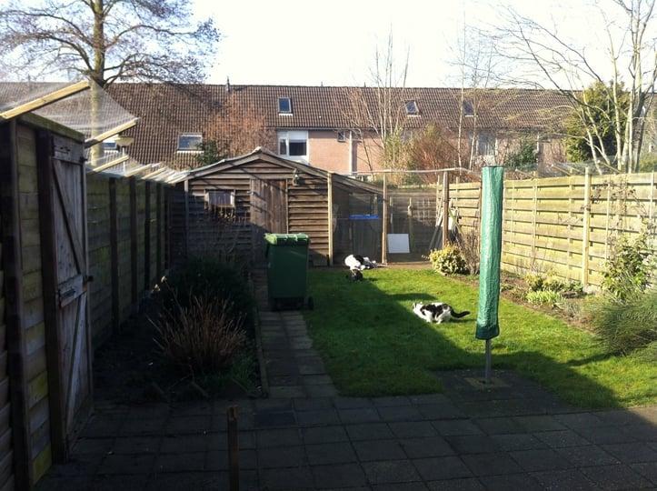 Tuin Afzetten Kat : Afzetten van de tuin is klaar u katten buiten onderweg