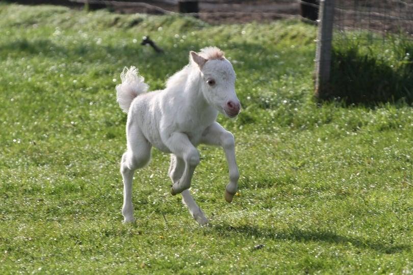 Foto paard met veulen 24