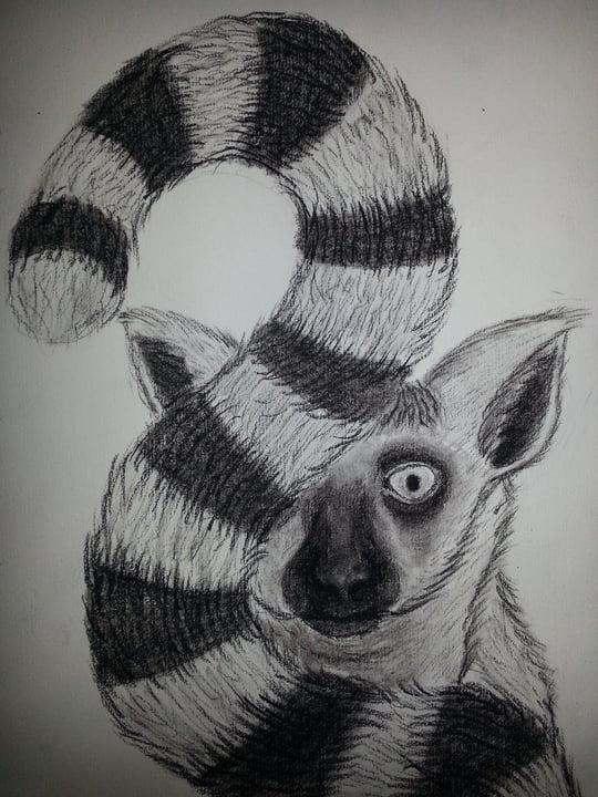 [GAME] Teken het dier-topic! • Bokt.nl Raccoon Drawing
