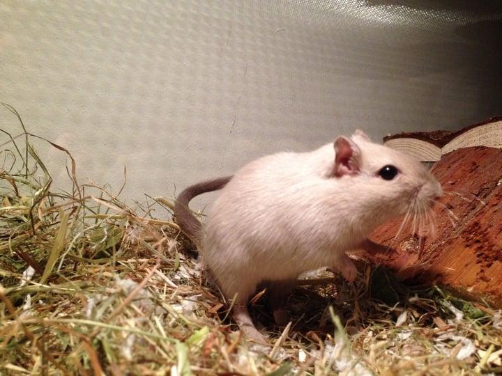 hamster holletje gemaakt in buis